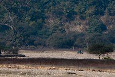 The beautiful planet blog: Rajaji national park - unspoiled
