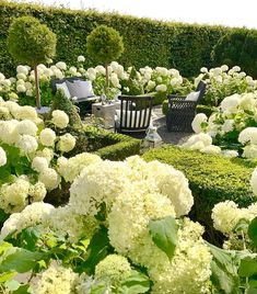 I love all the seasons in the garden, but it's especially wonderful when the Hydrangea Annabelles are in bloom 🌿Soon it's that time again,… Hydrangea Landscaping, Flower Garden, White Flowers, Plants, White Gardens, Topiary, Flowers, Garden Planning, Beautiful Gardens