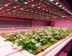 Philips' new GrowWise indoor farm will revolutionize food prod...
