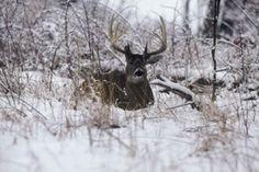 Sanctuaries: The Key to Big Bucks #deer #whitetail #hunting