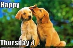 Image result for Thursday Animals