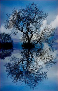 ~~Floating Tree 2 by brianjarvis~~
