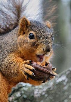 Dis iz my walnut. Dere's a lot like it, but dis one iz mine!