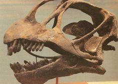 dinosaur bones - Google Search