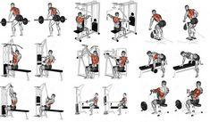 Back workout gym back workout, traps workout, back and bicep workou Gym Back Workout, Back Workout Routine, Back And Bicep Workout, Traps Workout, Gym Workout Chart, Work Out Routines Gym, Gym Workout Tips, Aerobics Workout, Biceps Workout