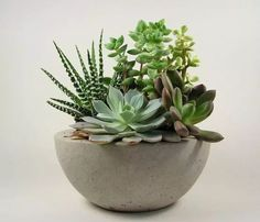 Outdoors and Gardening / Succulents in a concrete bowl on We Heart It