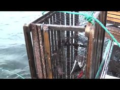 Lobster Fishing in Prince Edward Island - http://www.nopasc.org/lobster-fishing-in-prince-edward-island/