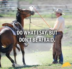 """""""Do what I say, but don't be afraid."""" - Pat Parelli"""
