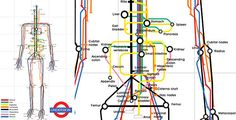 Body map using the London Tubes map design. Very Cool!