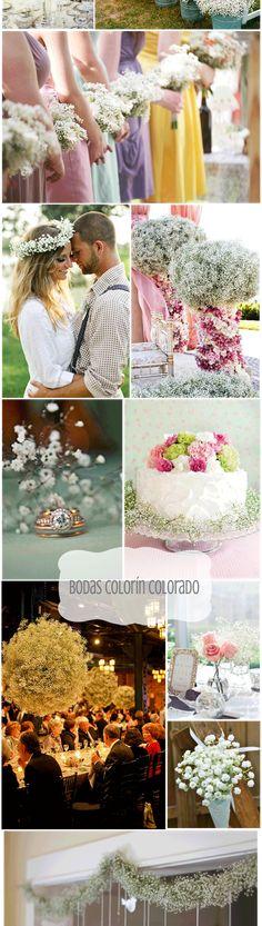 Decora tu boda con paniculata - Bodas Colorín Colorado -