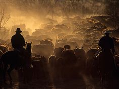 I want to go on a cattle drive out West