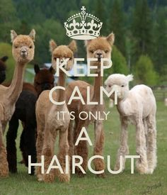 KEEP CALM IT'S ONLY A HAIRCUT- by me JMK