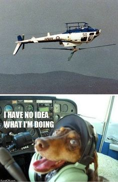 Funny Clueless Helicopter Pilot Dog
