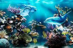 Resultado de imagen de delfines para fondo de pantalla