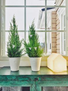 kultasypressi, tähtiruukku, innolux talo, matala astiakaappi, paperinen viirinauha, valkoinen viirinauha, white bunting,