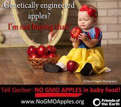STOP GMO Arctic Apple
