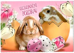 Veľkonočný pozdrav Rabbit, Animals, Animales, Animaux, Rabbits, Bunny, Bunnies, Animal, Animais