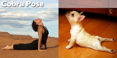 27 yoga poses, as demonstrated by animals.