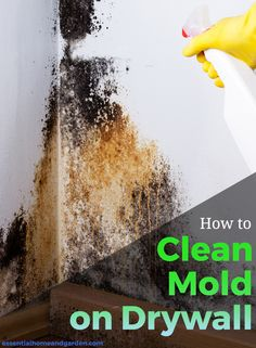 How to remove mold on drywall
