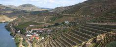 Quinta de Vargellas is pre-eminent among the wine estates of the #Douro in #Portugal. #port #wine