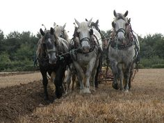 The #WorldPercheronCongress Comes to West #Springfield, Massachusetts. The ground in West Springfield, MA will rumble from October 6th through the 11th with more than 850 #Percheron #Horses  attending the World Percheron Congress 2014. Learn more about this great event....