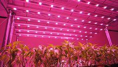 World LED Grow Lights Market 2017 - Philips, OSRAM, Fionia Lighting, Valoya, Apollo Horticulture, Grow LED Hydro, Flow Magic, Kessil - https://techannouncer.com/world-led-grow-lights-market-2017-philips-osram-fionia-lighting-valoya-apollo-horticulture-grow-led-hydro-flow-magic-kessil/