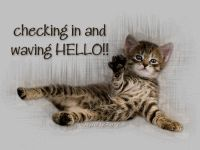 Bengal Cat Facts Hello From An Adorable Kitten! I Love Cats, Crazy Cats, Cool Cats, Friday Quotes Humor, Cat Quotes, Monday Humor, Animal Quotes, Hello Kitten, Kitten Gif