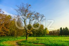 Qdiz Stock Photos | Autumn Nature with Narrow Pathway Leading into Park,  #autumn #background #branch #colorful #day #environment #fallen #foliage #footpath #golden #grass #green #ground #landscape #leaf #leaves #lush #multicolored #narrow #nature #nobody #outdoor #park #path #pathway #road #scenery #season #sky #sunlight #sunny #tranquil #tree #walkway #way #wood #yellow