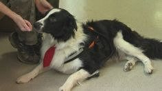 5 year old boy helps save search and rescue dog