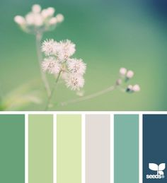 green + blue color palette