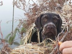 Cold morning duck hunting with Floyd