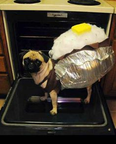 Baked Pugtato. | 26 Costumes That Prove Pugs Always Win At Halloween