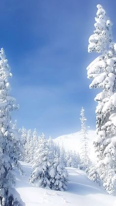 a winter wonderland of snow and trees for christmas | iPhone Wallpaper