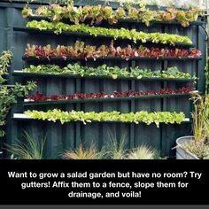 Gutter Garden Salad