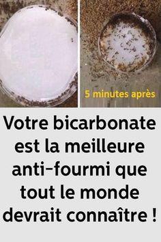 Votre bicarbonate est la meilleure anti-fourmi que tout le monde devrait connaître !