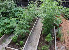 Raised Beds 101 - HOMEGROWN