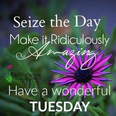 Seize The Day Have An Amazing Tuesday tuesday tuesday quotes happy tuesday…