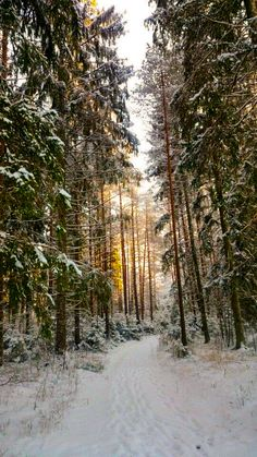 Winter trail (Sigulda, Latvia) cr.c.