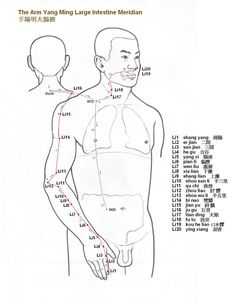 Arm Yang Ming Large Intestine Meridian