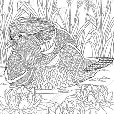 Mandarin Duck Adult Coloring Book Page. Zentangle Doodle Coloring Pages for Adults. Digital illustration. Instant Download Print.