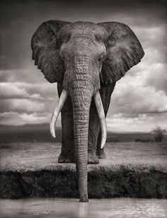 Stunning Photographs of Earth's Gentle Giants by Nick Brandt