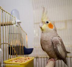 Un papagal