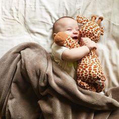 Giraffe cuddles.
