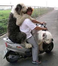 Picture #396  A large collection of photos of dogs (More than 1,700 photos)