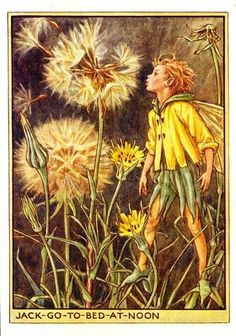 This beautiful Jack-Go-To-Bed-At-Noon Flower Fairy Vintage Print by Cicely Mary Barker was printed and is an original book plate an early Flower Fairy book. Cicely Barker created 168 flower fairy illustrations in total for her many books. Cicely Mary Barker, Art Floral, Flower Fairies Books, Kobold, Dandelion Flower, Vintage Fairies, Beautiful Fairies, Fantasy Illustration, Fairy Art