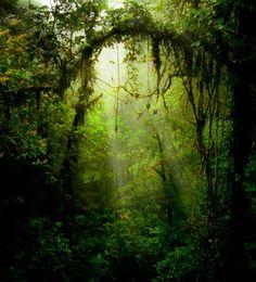 El libro de la selva   Ventas en Westwing-Casi el 20% de la superficie de la India está cubierta de bosque con una vegetación rica y variada. Allí se encuentran animales emblemáticos y endémicos, como el tigre, conocido Shere Khan es el enemigo de Mowgli.