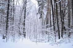 https://flic.kr/p/2186PWw   Winter forest.