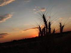 """Harvest Sunset"" Cheyenne County, Kansas. Like, comment or share to vote! The top 10 photos will advance to the final rounds!"