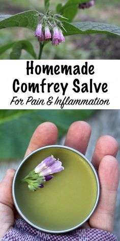 15 dakika · 4 kadar tinsComfrey salve is easy to make at home, using homegrown herbs or by purchasing dried comfrey. Studies show that comfrey is an effective herbal pain reliever when applied topically. Cold Home Remedies, Natural Health Remedies, Natural Cures, Natural Healing, Herbal Remedies, Natural Foods, Natural Skin, Sleep Remedies, Natural Sleep