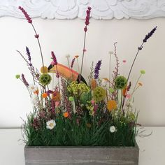Dublin based supplier of preserved indoor plants, preserved flowers, botanicals and moss art. We help nature-lover to decor their home with real preserved plants that don't wilt and are maintenance-free. Wooden Flower Boxes, Preserved Flowers, Moss Art, How To Preserve Flowers, Nature Decor, Botanical Art, Diy Flowers, Natural World, Wall Signs